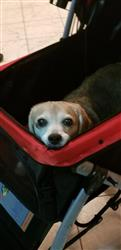 Becky L. verified customer review of PET ROVER™ Premium Stroller for Small/Medium/Large Dogs, Cats and Pets (Red)