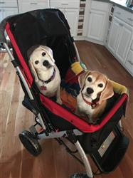 Janine P. verified customer review of PET ROVER™ Premium Stroller for Small/Medium/Large Dogs, Cats and Pets (Red)