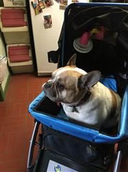 Vicki C. verified customer review of PET ROVER™ Premium Stroller for Small/Medium/Large Dogs, Cats and Pets (Red)