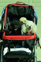 Shulamit R. verified customer review of PET ROVER™ Premium Stroller for Small/Medium/Large Dogs, Cats and Pets (Red)