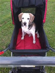 Penny .. verified customer review of PET ROVER™ Premium Stroller for Small/Medium/Large Dogs, Cats and Pets (Red)