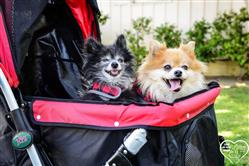 Leave N. verified customer review of PET ROVER™ Premium Stroller for Small/Medium/Large Dogs, Cats and Pets (Red)
