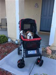 Angelica S. verified customer review of PET ROVER™ Premium Stroller for Small/Medium/Large Dogs, Cats and Pets (Red)