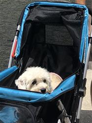 Chris verified customer review of PET ROVER™ Premium Stroller for Small/Medium/Large Dogs, Cats and Pets (Red)