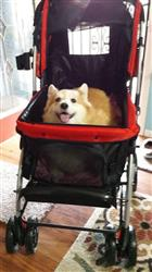 Amanda M. verified customer review of PET ROVER™ Premium Stroller for Small/Medium/Large Dogs, Cats and Pets (Red)