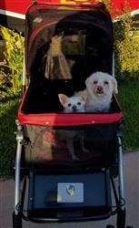 Julie B. verified customer review of PET ROVER™ Premium Stroller for Small/Medium/Large Dogs, Cats and Pets (Red)