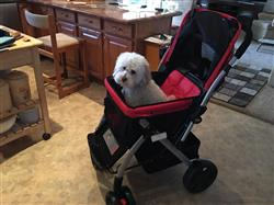 Priscilla verified customer review of PET ROVER™ Premium Stroller for Small/Medium/Large Dogs, Cats and Pets (Red)