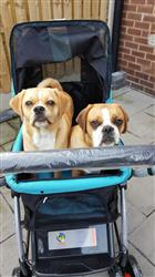 sue h. verified customer review of PET ROVER™ Premium Stroller for Small/Medium/Large Dogs, Cats and Pets (Sky Blue)