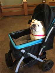 Ulla J. verified customer review of PET ROVER™ Premium Stroller for Small/Medium/Large Dogs, Cats and Pets (Sky Blue)