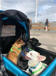 Juanita E. verified customer review of PET ROVER™ Premium Stroller for Small/Medium/Large Dogs, Cats and Pets (Sky Blue)