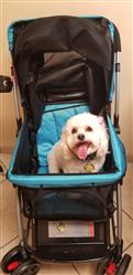 Julie .. verified customer review of PET ROVER™ Premium Stroller for Small/Medium/Large Dogs, Cats and Pets (Sky Blue)