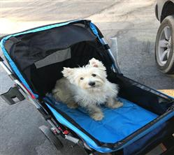 Allen verified customer review of PET ROVER™ Premium Stroller for Small/Medium/Large Dogs, Cats and Pets (Blue)