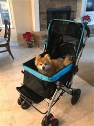 Jennifer B. verified customer review of PET ROVER™ Premium Stroller for Small/Medium/Large Dogs, Cats and Pets (Sky Blue)