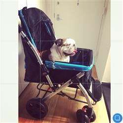 Mariana N. verified customer review of PET ROVER™ Premium Stroller for Small/Medium/Large Dogs, Cats and Pets (Blue)