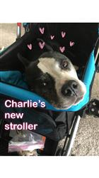 Anonymous verified customer review of PET ROVER™ Premium Stroller for Small/Medium/Large Dogs, Cats and Pets (Sky Blue)