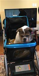 PET ROVER™ Premium Stroller for Small/Medium/Large Dogs, Cats and Pets (Sky Blue)