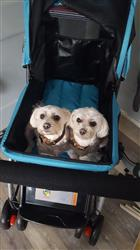 Andrea R. verified customer review of PET ROVER™ Premium Stroller for Small/Medium/Large Dogs, Cats and Pets (Sky Blue)