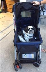 Lisa B. verified customer review of PET ROVER™ Premium Stroller for Small/Medium/Large Dogs, Cats and Pets (Navy Blue)