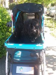 Ronda verified customer review of PET ROVER™ Premium Stroller for Small/Medium/Large Dogs, Cats and Pets (Navy Blue)