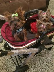 Vivian garcia verified customer review of PET ROVER PRIME™ Luxury 3-in-1 Stroller for Small/Medium Dogs, Cats and Pets (Ruby Red)