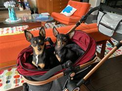 JC verified customer review of PET ROVER PRIME™ Luxury 3-in-1 Stroller for Small/Medium Dogs, Cats and Pets (Ruby Red)