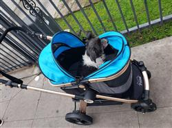 C. leung verified customer review of PET ROVER PRIME™ Luxury 3-in-1 Stroller for Small/Medium Dogs, Cats and Pets (Sky Blue)