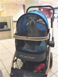 Karen W verified customer review of PET ROVER PRIME™ Luxury 3-in-1 Stroller for Small/Medium Dogs, Cats and Pets (Sky Blue)