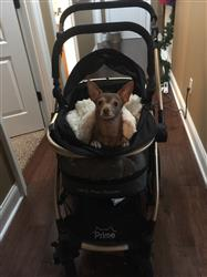 Paige E verified customer review of PET ROVER PRIME™ Luxury 3-in-1 Stroller for Small/Medium Dogs, Cats and Pets (Black)