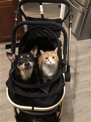 Cindy W. verified customer review of PET ROVER PRIME™ Luxury 3-in-1 Stroller for Small/Medium Dogs, Cats and Pets (Black)