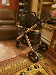 Tracie E. verified customer review of PET ROVER PRIME™ Luxury 3-in-1 Stroller for Small/Medium Dogs, Cats and Pets (Black)