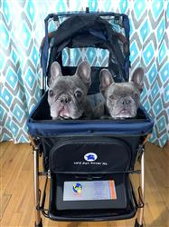 Sarah V verified customer review of PET ROVER™ XL Extra-Long Premium Stroller for Small/Medium/Large Dogs, Cats and Pets (Navy Blue)