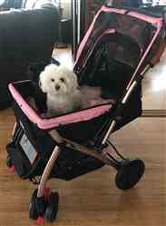 Lisa verified customer review of PET ROVER™ XL Extra-Long Premium Stroller for Small/Medium/Large Dogs, Cats and Pets (Pink)