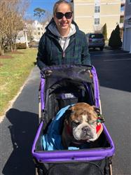 Kari K. verified customer review of PET ROVER™ XL Extra-Long Premium Stroller for Small/Medium/Large Dogs, Cats and Pets (Purple)