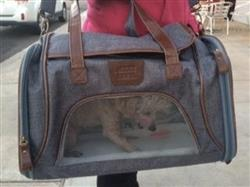 The Laika - Gray Pet Carrier