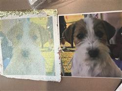 Courtney M. verified customer review of PupPillow: Print Your Pup's photo on pillow reversible SEQUINS!