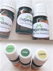 Pine Essential Oil-Free-Sample