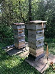 Marina R. verified customer review of Warre Hive Box