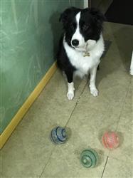 Tara C. verified customer review of Striped Jump Ball With Light, 6 per Bag