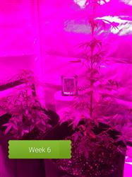 Anonymous verified customer review of The Complete Marijuana Seed & Grow Set (Beginners)