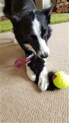 Yvonne W. verified customer review of Sheepskin Ball Tug