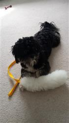 Rachel W. verified customer review of Sheepskin Chaser Tug