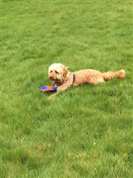 Siân P. verified customer review of Frisbee