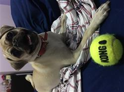 Patricia T. verified customer review of Pug 25