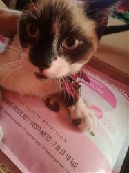 Nayeli C. verified customer review of Kitten