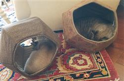 Suz W. verified customer review of Cat Ball cat bed in brown leaves with coffee linen lining