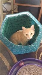 stefanie g. verified customer review of Cat Ball cat cave bed in navy and teal abstract leaves and zinnia fabric