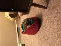 Alicia B. verified customer review of Cat Canoe in realistic strawberry fabric