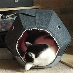 Kimberly S. verified customer review of Great White Shark Cat Ball Cat Bed