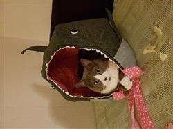 Jelena R. verified customer review of Great White Shark Cat Ball Cat Bed
