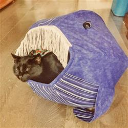 Anonymous verified customer review of Great White Shark Cat Ball Cat Bed